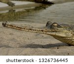 Crocodile with a long mouth