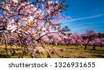 close up of almond trees pink... | Shutterstock . vector #1326931655