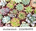 collection of small decorative... | Shutterstock . vector #1326984995