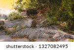 stone in the shape of a lizard... | Shutterstock . vector #1327082495