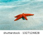 red sea star close up on sandy... | Shutterstock . vector #1327124828
