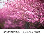 branches of a beautiful pink... | Shutterstock . vector #1327177505