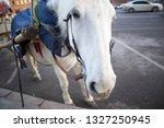 funny cute white horse... | Shutterstock . vector #1327250945