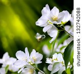 Spring Flowers Background  Wit...