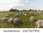 Sheep On The Field
