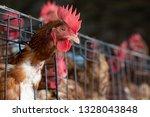 chicken in the factory  hens in ... | Shutterstock . vector #1328043848