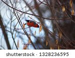 the red bullfinch  sitting on a ...   Shutterstock . vector #1328236595
