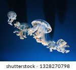 Jellyfish Or Sea Jellies In A...
