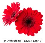 two   red gerbera flower heads... | Shutterstock . vector #1328412548
