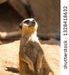 meerkat animal  latin name... | Shutterstock . vector #1328418632