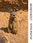 meerkat animal  latin name... | Shutterstock . vector #1328418638