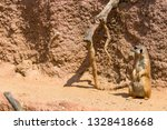 meerkat animal  latin name... | Shutterstock . vector #1328418668