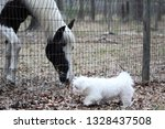 Curious Dog And Horse