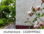 beautiful  pink pale clmbing... | Shutterstock . vector #1328499062