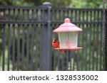 red male northern cardinal... | Shutterstock . vector #1328535002