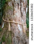 Stock photo the trunk of a camphor tree decorated with a sacred shinto straw festoon called shimenawa at 1328605382