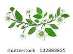white flowers on twig...   Shutterstock .eps vector #132883835