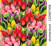 Bouquet Of Multicolor Tulips....