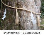 Stock photo the trunk of a camphor tree decorated with a sacred shinto straw festoon called shimenawa at 1328880035