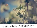 photo of beautiful spring... | Shutterstock . vector #1329001892