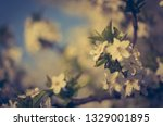 photo of beautiful spring... | Shutterstock . vector #1329001895