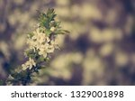 photo of beautiful spring... | Shutterstock . vector #1329001898