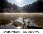 The Swans Couple Lover In Pang ...
