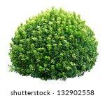 round ornamental bush isolated... | Shutterstock . vector #132902558