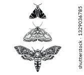 moth illustration black and... | Shutterstock .eps vector #1329036785