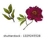 burgundy peony floral botanical ... | Shutterstock . vector #1329245528