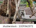 beautiful gray shaggy shaggy... | Shutterstock . vector #1329362372