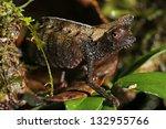 brown leaf chameleon  brookesia ... | Shutterstock . vector #132955766