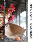 chicken in the factory  hens in ... | Shutterstock . vector #1329578132
