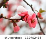 Blossoming Fruit  Branch Under...