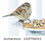 sparrows feeding. sparrows... | Shutterstock . vector #1329706412
