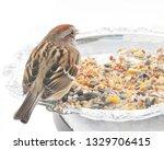 sparrows feeding. sparrows...   Shutterstock . vector #1329706415