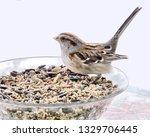 sparrows feeding. sparrows... | Shutterstock . vector #1329706445