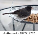 junco's eating birdseed.... | Shutterstock . vector #1329719732