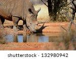 White Rhino With Big Horn...