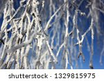 morning frost painted birch... | Shutterstock . vector #1329815975