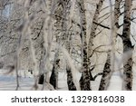 morning frost painted birch... | Shutterstock . vector #1329816038