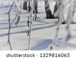 morning frost painted birch... | Shutterstock . vector #1329816065