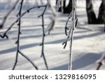 morning frost painted birch... | Shutterstock . vector #1329816095