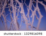 morning frost painted birch... | Shutterstock . vector #1329816098