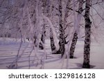 morning frost painted birch... | Shutterstock . vector #1329816128