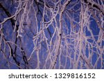 morning frost painted birch... | Shutterstock . vector #1329816152