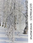 morning frost painted birch... | Shutterstock . vector #1329816155