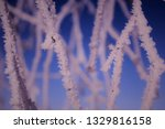 morning frost painted birch... | Shutterstock . vector #1329816158