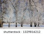 morning frost painted birch... | Shutterstock . vector #1329816212