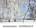 morning frost painted birch... | Shutterstock . vector #1329816215